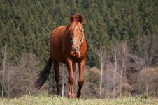 Free Walking Horse Stock Photos - 2196903