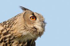 Free Owl Stock Image - 2196961