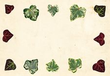 Free Ivy Leaf Border Stock Photo - 2197230