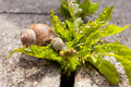 Free Snail Eating Leaves Royalty Free Stock Photos - 21903738