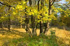 Free Autumn Landscape Stock Photography - 21900632