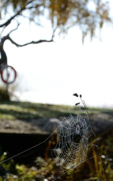 Free Autumn S Spiderweb Royalty Free Stock Images - 21905449