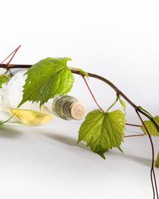 Free Bottle Of White Wine Stock Image - 21910511