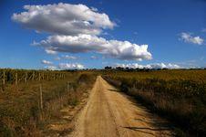 Vineyards In Sardinia. Royalty Free Stock Photos