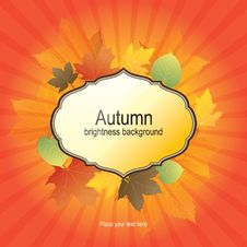 Free Autumn Background With Bright Leaves Stock Photography - 21910962