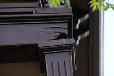 Free Broken Wood Railing Of Porch, Birds Nest Adventure Royalty Free Stock Photography - 219148927
