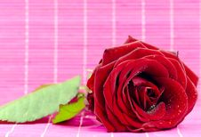 Free Red Rose Stock Photo - 21928950