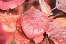 Free Autumn Leaves Royalty Free Stock Photography - 21930317