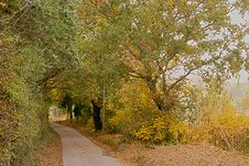 Free Golden Trees Surround The Bend Road Royalty Free Stock Photo - 21934875