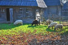 Free Wooden House Sheep Stock Photography - 21935642