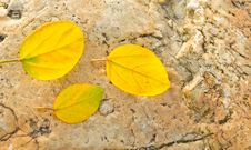Fall Yellow Leaves On Stone Royalty Free Stock Images