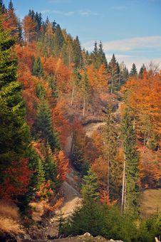Free Autumn Colors Stock Photos - 21936873