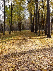Free Autumn Park Royalty Free Stock Image - 21941216