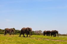 Free Elephants Walking  Between The Bushes Stock Image - 21942521
