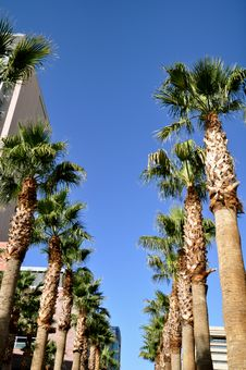 Free Palm Trees Against Blue Sky Stock Photo - 21942860