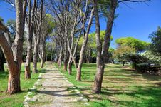 Free Path Through The Trees Royalty Free Stock Photography - 21943487