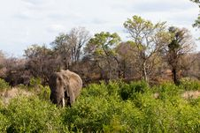 Free Elephant Standing Between The Bushes Stock Image - 21946581