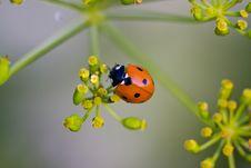 Free Ladybird Yellow Flower Stock Photos - 21949253
