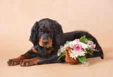 Setter S Puppy With Flowers Stock Photo
