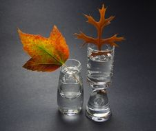 Free Two Autumn Leaves In Small Vases Stock Photography - 21953852