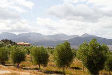 Free Mediterranean Summer Country Villa Royalty Free Stock Photography - 21957297