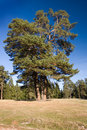 Free Beautiful Landscape Stock Image - 21966401