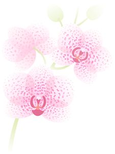 Free Orchid Branch Stock Image - 21961261