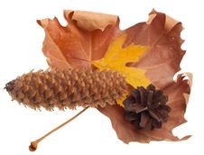 Free Autumn Leaves And Cones Stock Image - 21963081