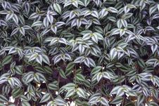 Free Ornamental Leaves Royalty Free Stock Photo - 21967845