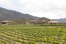 Free Mediterranean Vineyard Country Villas Royalty Free Stock Images - 21969319