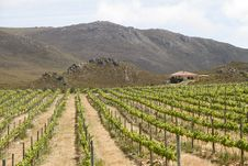 Mediterranean Vineyard Country Villa Royalty Free Stock Image