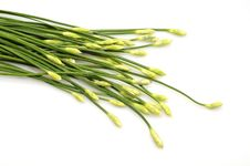 Free A Bunch Of Garlic Chives Royalty Free Stock Photos - 21971328