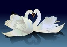 Free Two Swans Stock Photography - 21976302