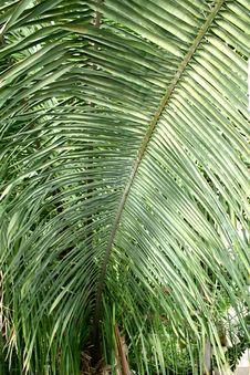 Free Palm Tree Tube Royalty Free Stock Photos - 21976868