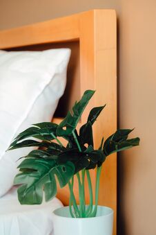 Artificial Plant Decoration In Bedroom Royalty Free Stock Photos