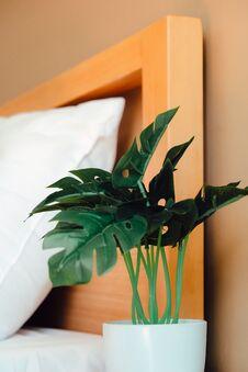 Artificial Plant Decoration In Bedroom Royalty Free Stock Images