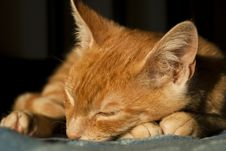 Cute Kitten Sleeping Royalty Free Stock Images