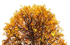 Colorful Autumn Treetop Stock Images