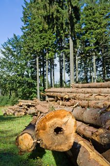 Free Forest Deforestation Stock Photography - 21987422