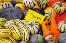 Free Colorful Gourds And Squash Royalty Free Stock Photography - 21988057
