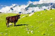 Free Wild Skinny Cow In Himalaya Mountains Stock Images - 21988694