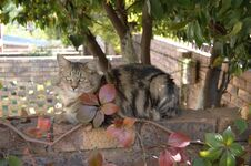 Free Feral Cats. Outdoor Cats .Moggies . Mixed Breed Cats. Royalty Free Stock Photo - 219891725