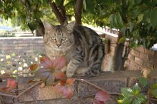 Free Feral Cats. Outdoor Cats .Moggies . Mixed Breed Cats. Royalty Free Stock Images - 219891779