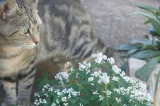 Free Feral Cats. Outdoor Cats .Moggies . Mixed Breed Cats. Royalty Free Stock Photos - 219892158