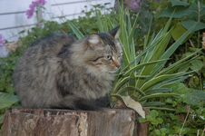 Free Feral Cats. Outdoor Cats .Moggies . Mixed Breed Cats. Royalty Free Stock Images - 219892239