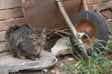 Free Feral Cats. Outdoor Cats .Moggies . Mixed Breed Cats. Stock Photography - 219892502