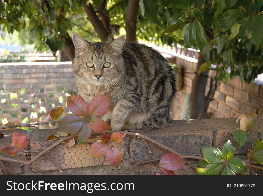 Feral cats. Outdoor cats .Moggies . Mixed breed cats.