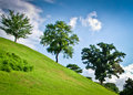 Free Three Green Trees On A Hill Side By Side Royalty Free Stock Image - 21991226