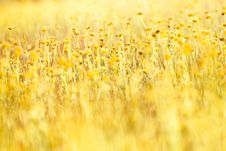 Free Small Flower In Grass Stock Photos - 21994363
