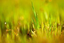 Free Grass Royalty Free Stock Image - 21994366